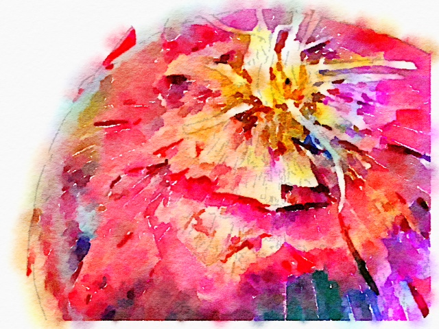 Red Onion Watercolor